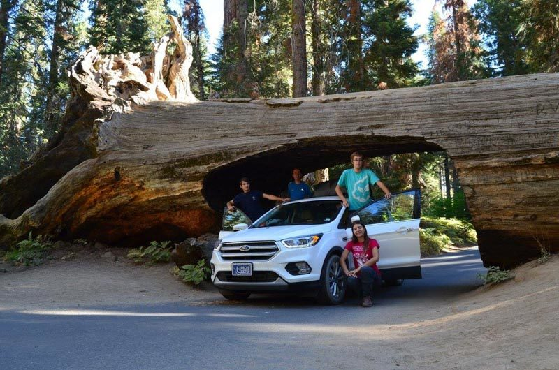 The Tunnel log in Sequoia National Park, Road Trip to the top National Parks in the US west coast.