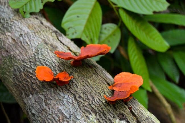 Houby z pralesa