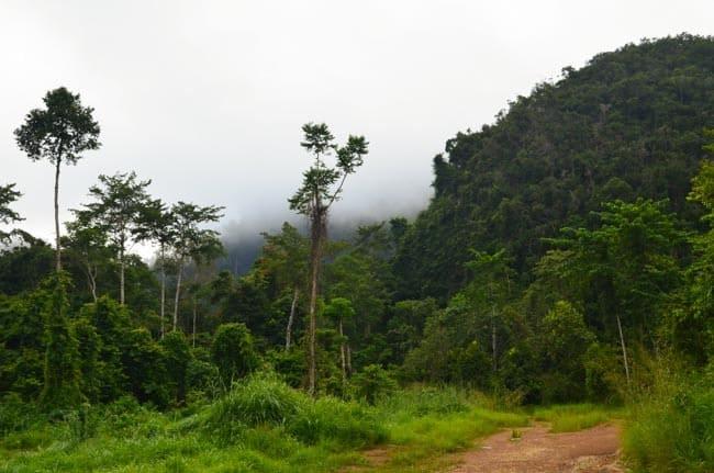 Deštný prales, Malajsie, dobrovolnictví v zahraničí