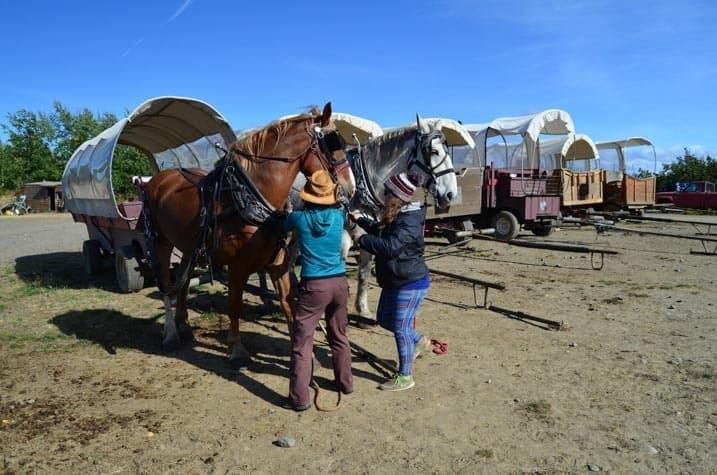 Zapřahání koní za dostavník