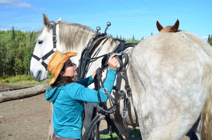 Harness on! Cool Summer Job in Alaska - Horse Wagon Guide