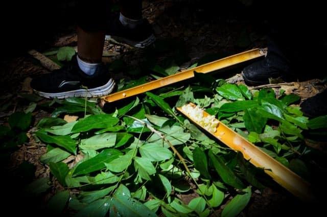 Oběd v džungli