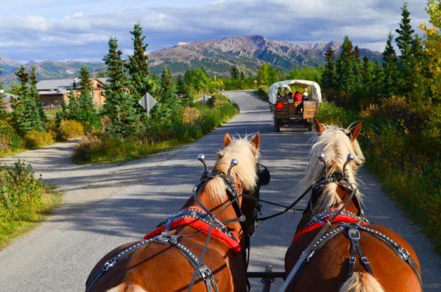 Work and Travel Aljaška: Práce průvodce na koňském dostavníku