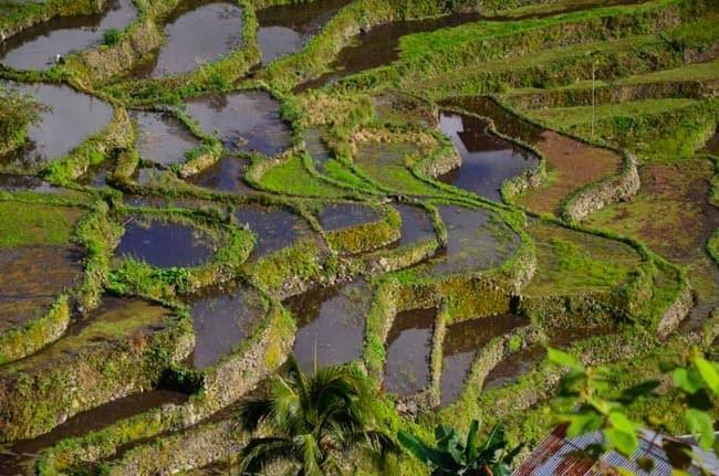 Rýžové terasy Batad, ostrov Luzon, severní FIlipíny