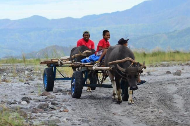 Transportation of Aeta tribe people - water buffalo, the Philippines