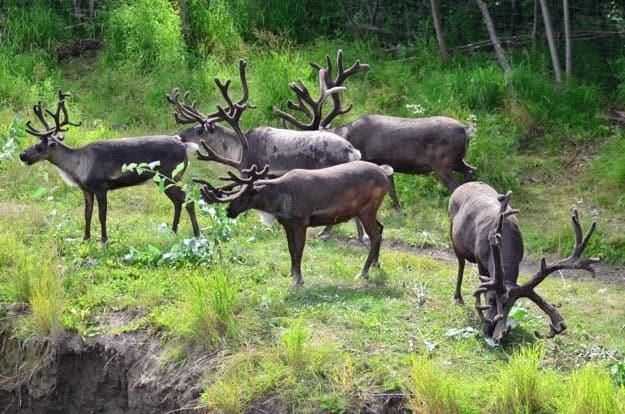 Aljaška: Lov a rozhovory s místními. Jak chutná medvěd?
