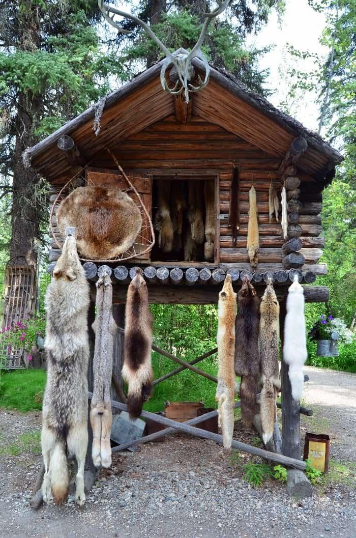 Kožešiny z vlka, rysa i několika druhů lišek v tradiční eskymácké vesničce ve Fairbanks, Aljaška lov
