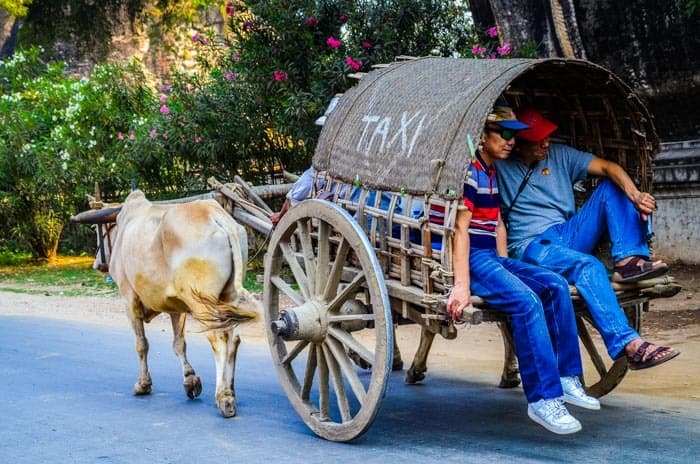 Cow taxi travel, Mingun.