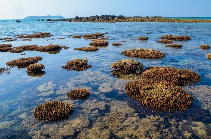 Korály za odlivu; Gwa, Myanmar