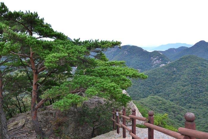 Přes 60% území Jižní Koreje pokrývají lesy.