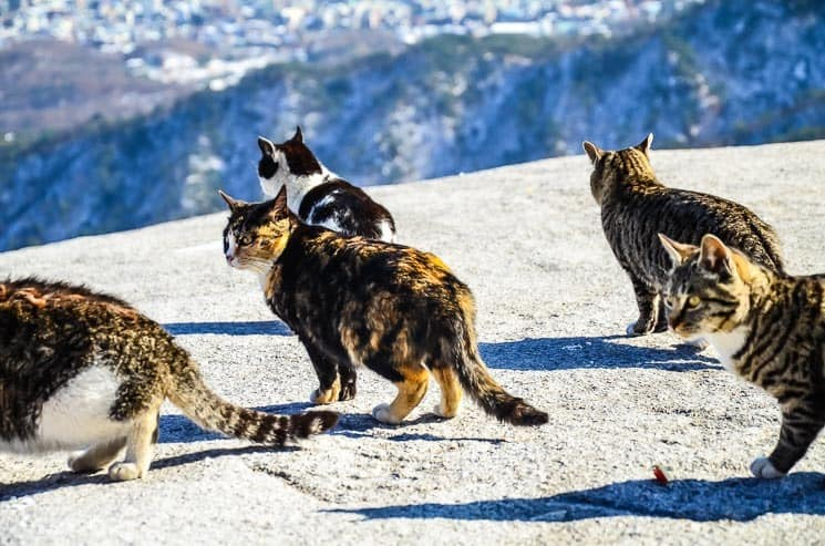 Wild mountain cats at the top of Bukhansan National Park, Seoul