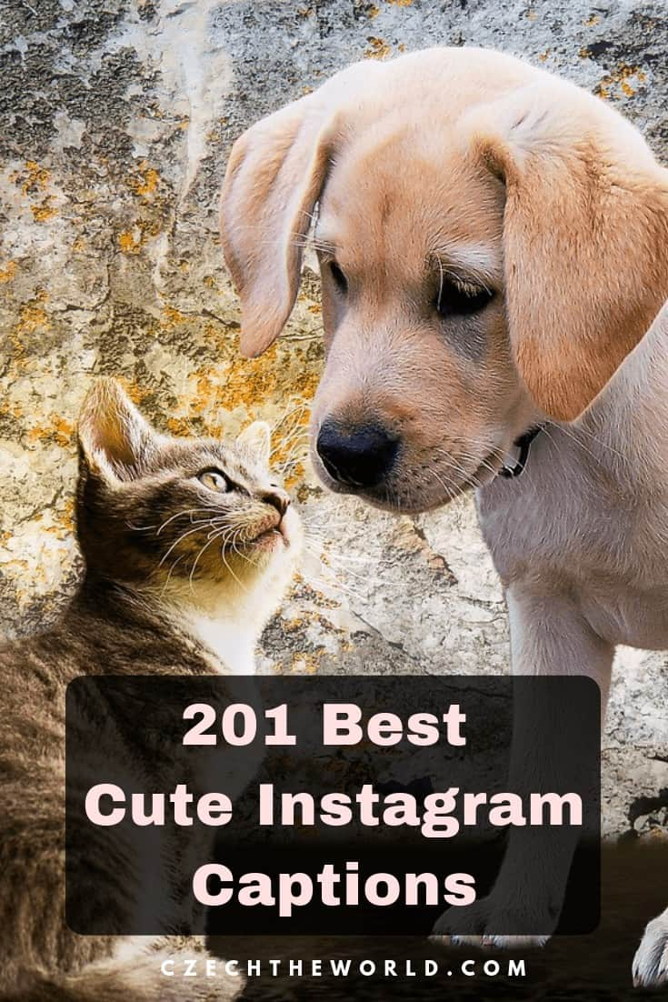 217 Best Cute Instagram Captions