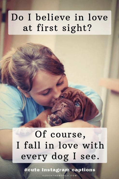 Do I believe in love at first sight_ Of course, I fall in love with every dog I see. Dog Instagram Captions