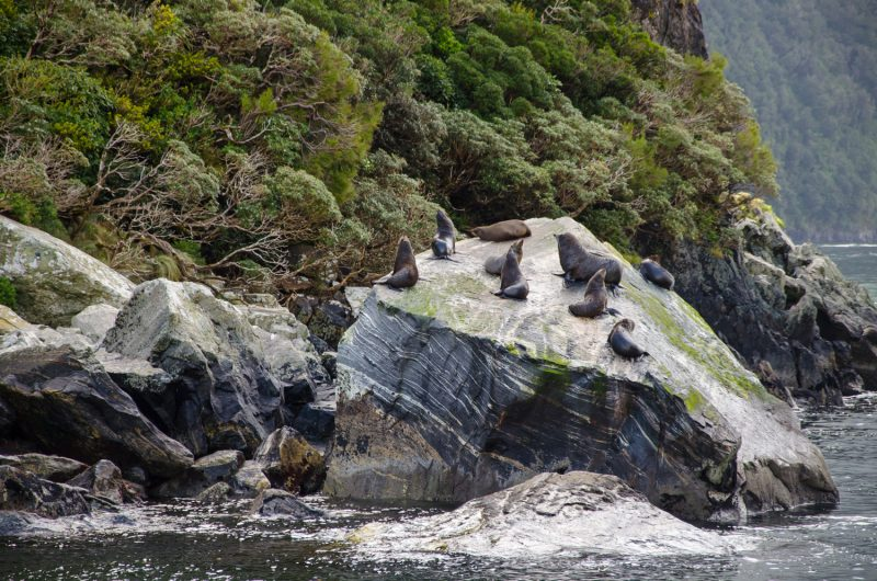 Milford Sound Cruise Experience, New Zealand 5