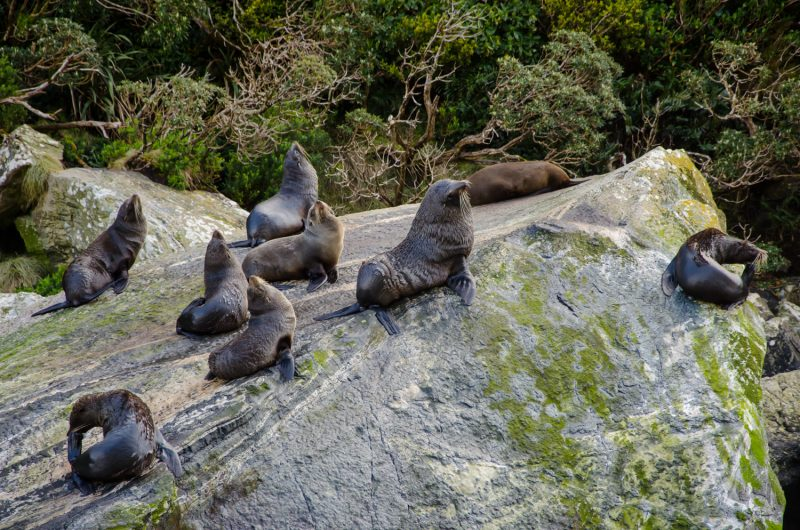Milford Sound Cruise Experience (14)
