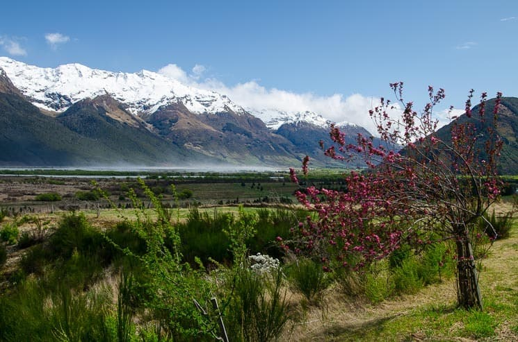 Roadside - Glenorchy area