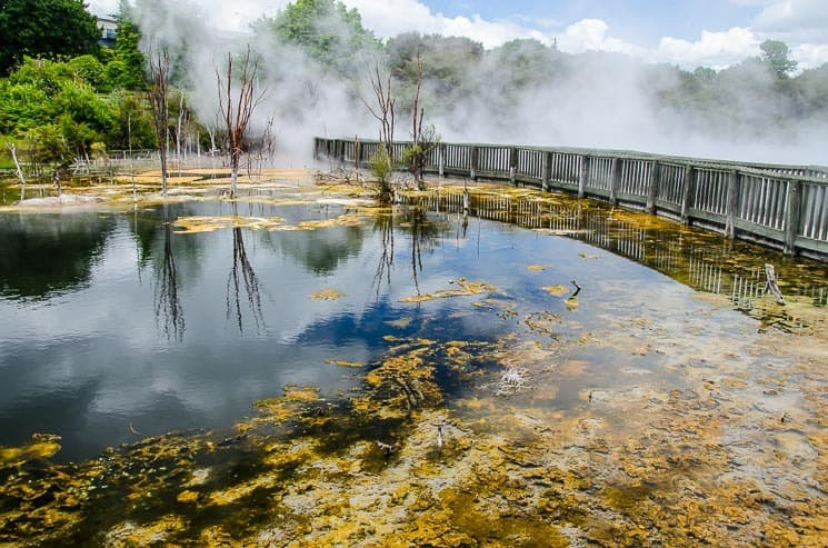 Kuirau Park - Things To Do In Rotorua