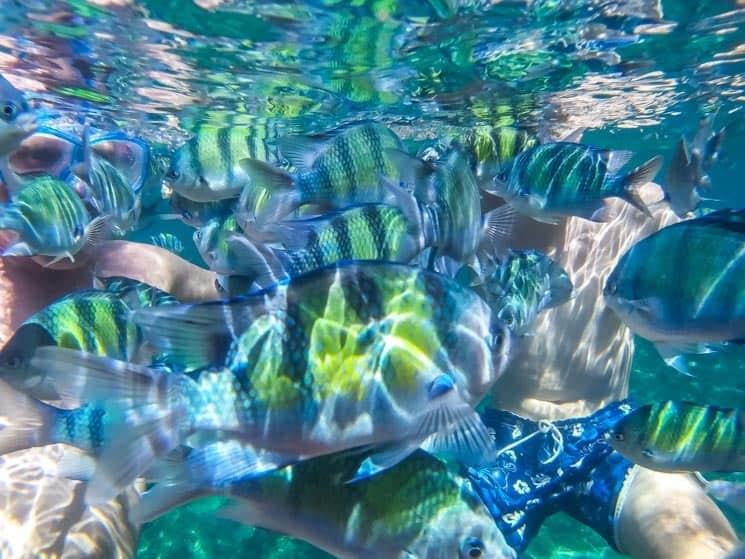 Potápění na ostrovech Ko Pi Pi je zážitek