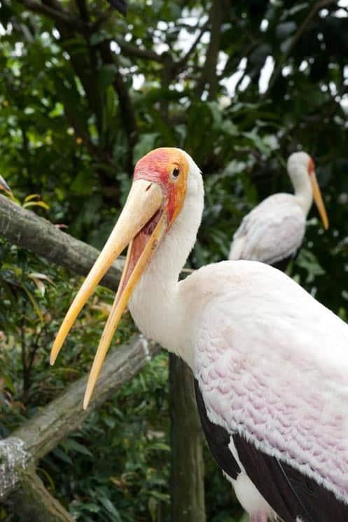 Taman Burung Brid Park