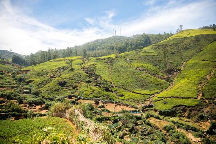 Srí Lanka, Čajové plantáže pod Nuwara Elyia po cestě do čajové továrny Tea bush