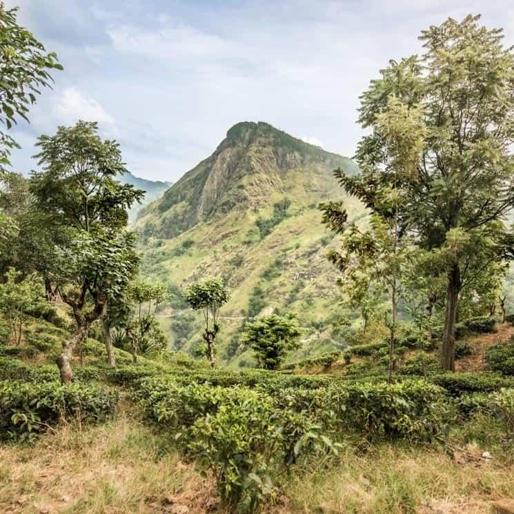 Ella, Srí Lanka