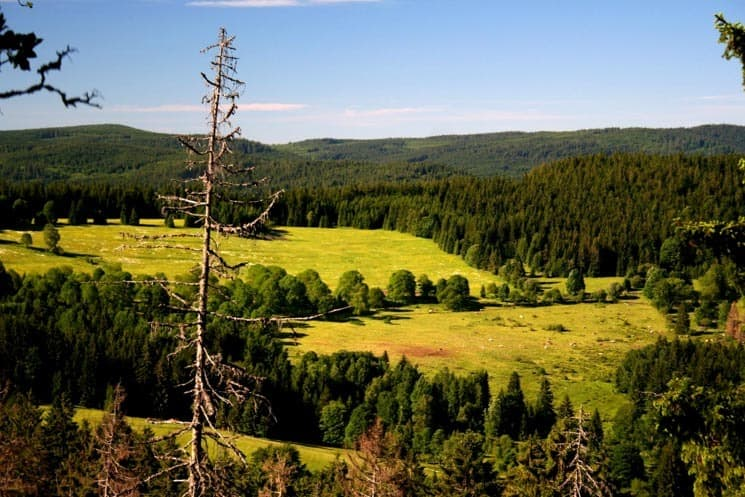 The deep forest of Šumava, Czechia - A perfect destination to escape busy cities