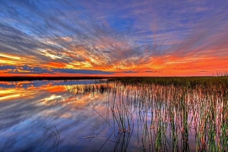 Everglades (1)
