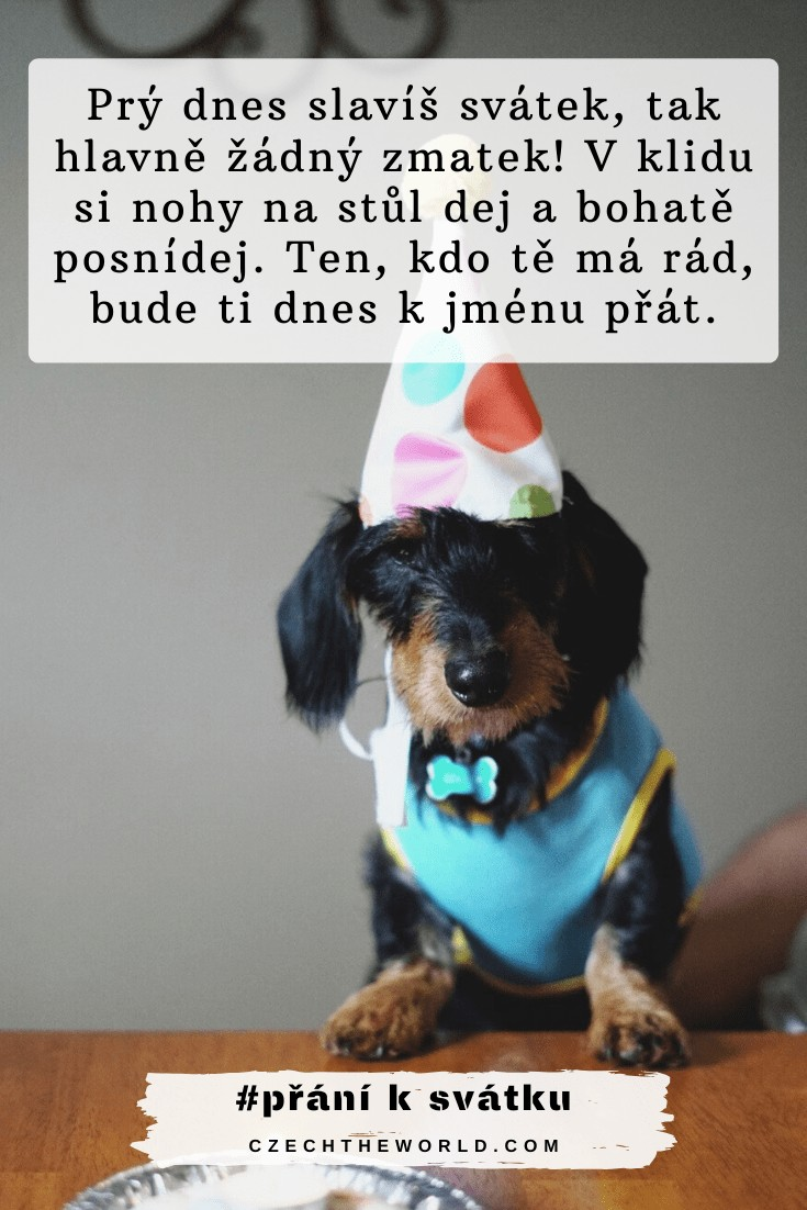 Přání k svátku pro kamarádku - pes