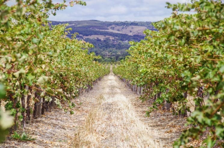 Winery California