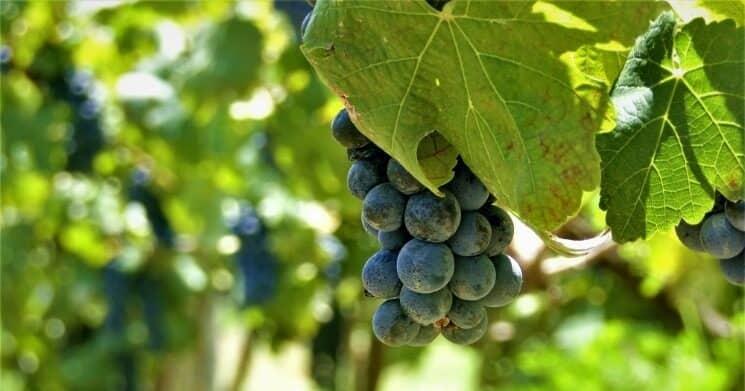 Wineries in California (6) (1)