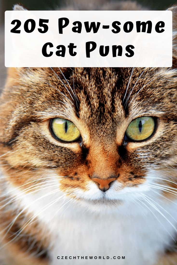 205 Best Cat Puns That Are Simply Paw-some! 2