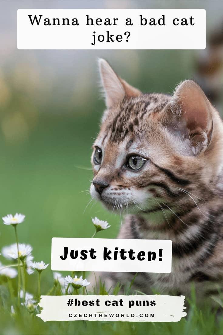 Kitten puns