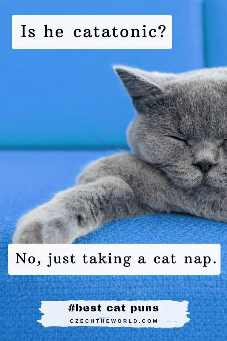 Best Cat Puns Jokes