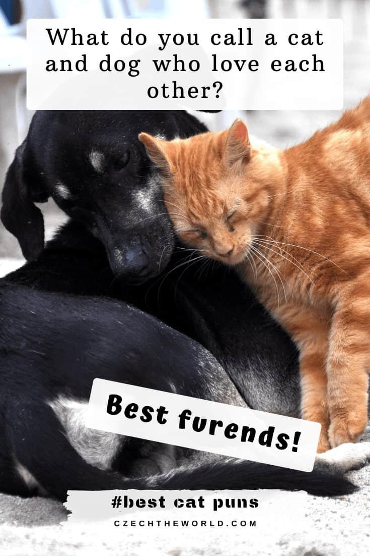 Funny Cat Puns Jokes