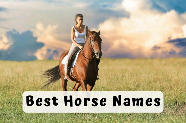 Best Horse Names