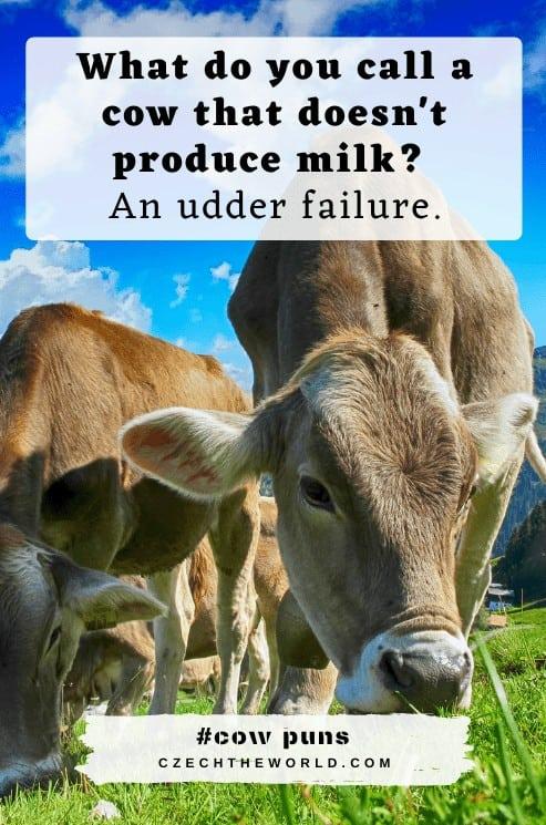 Udder Cow Puns