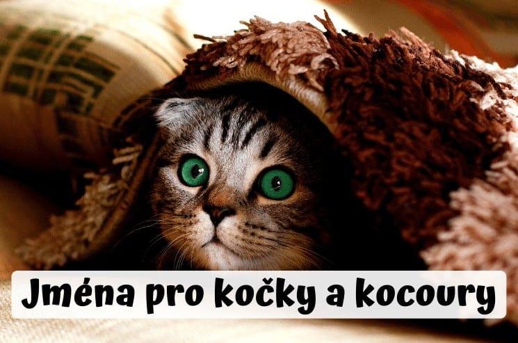 Jména pro kočky a kocoury