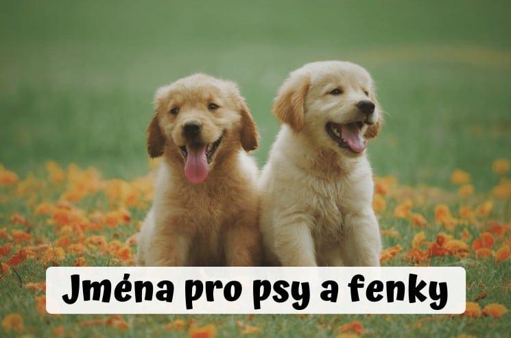 Jména pro psy