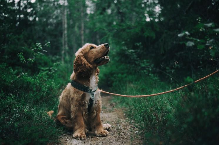 Jméno pro psa