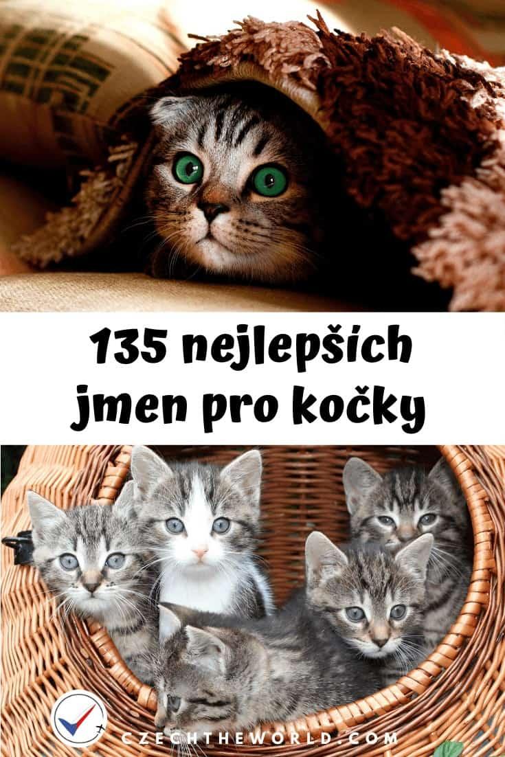 Nejlepší kočičí jména + kočičí kalendář