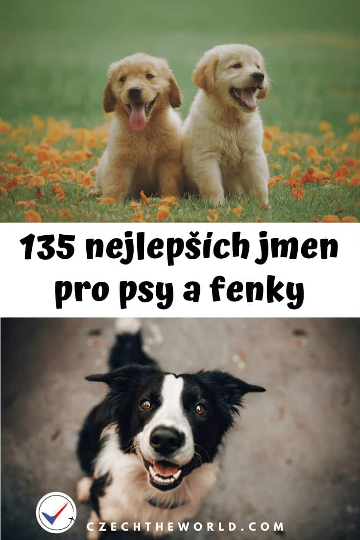 Jména pro psy a fenky: 135 nejlepších + psí kalendář 1