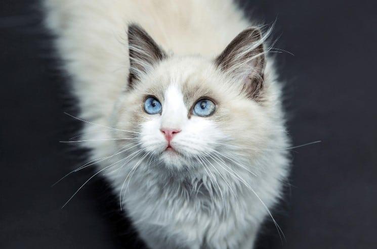 jméno pro kočku
