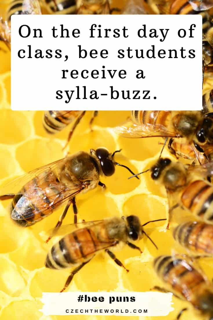 Best Bee Puns and jokes