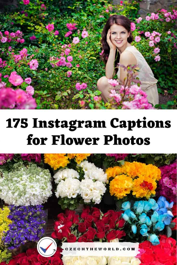 Instagram Captions for Flower Photos
