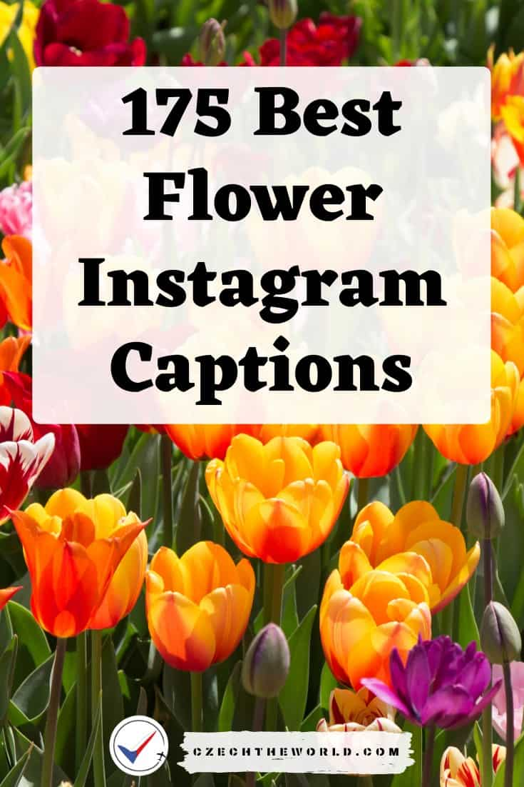 Best Flower Instagram Captions