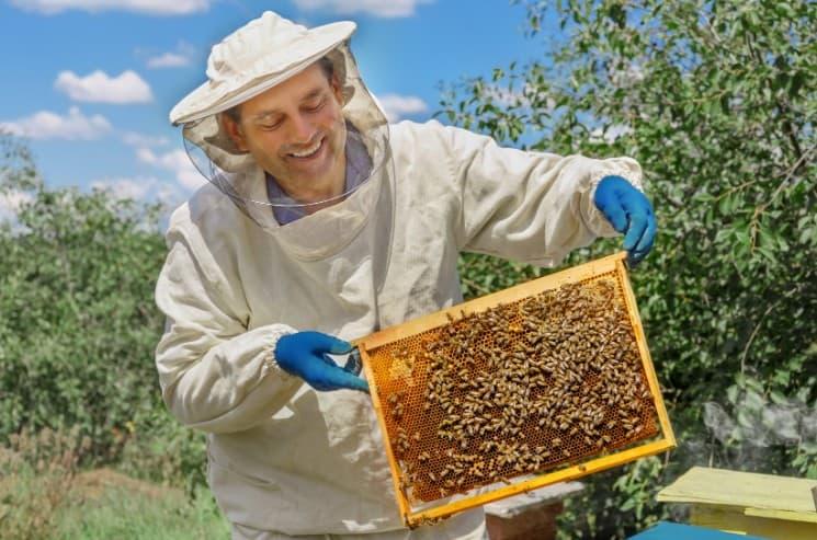 Koníčky, hobby, zájmy - včelařství
