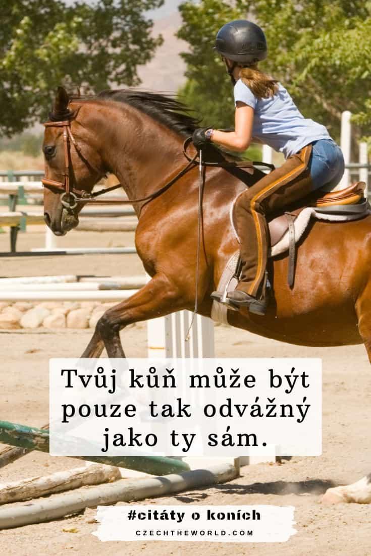 Motivační citáty o koních