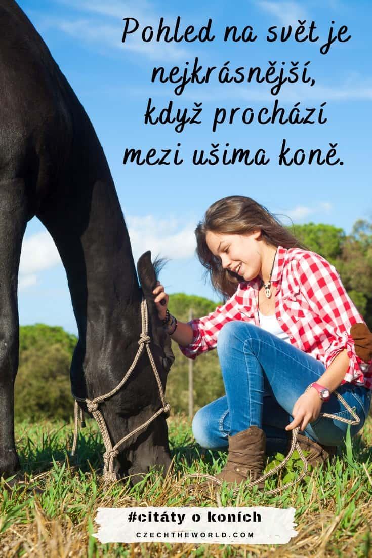Přísloví o koních