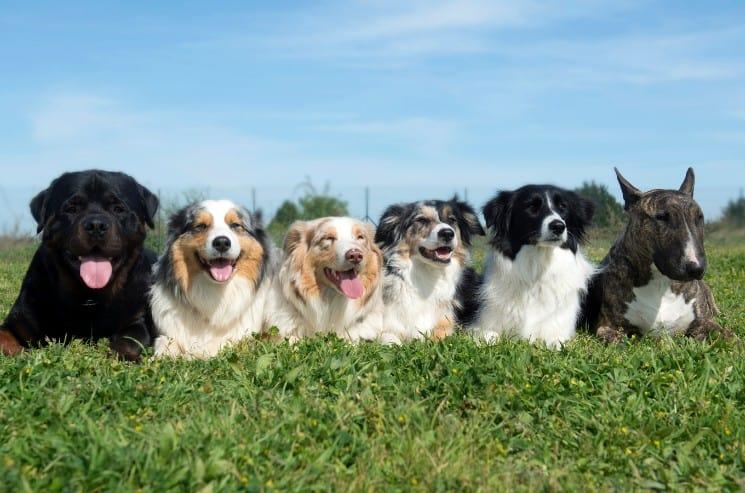 Creative Dog Walking Business Names