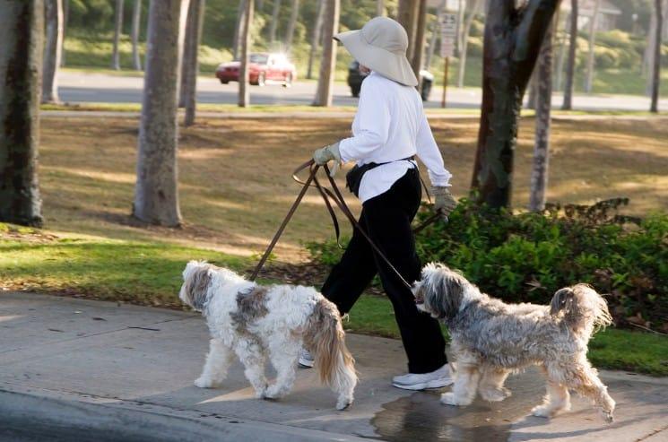 Cute Dog Walking Business Names